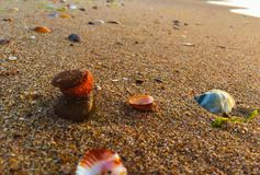 Multicolor stones and shells Stock Image