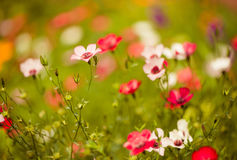 Multicolor summer flowers at sunlight Stock Image