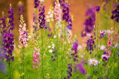 Multicolor summer garden flowers Stock Image