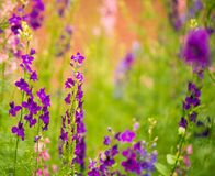 Multicolor summer garden flowers Stock Photos