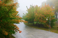 The multicolor trees in fog Royalty Free Stock Photo