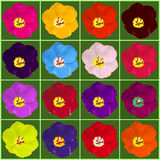 Multicolor tulipany ustawiający Obrazy Stock
