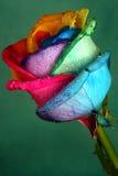 Multicolore s'est levé image libre de droits