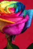 Multicolore s'est levé Photos libres de droits