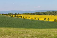 Multicolored agricultural fields. Spring rural landscape. Blue sky, green wheat, yellow rape. royalty free stock photo