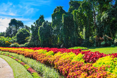 Multicolored alley of flowers and trees Royalty Free Stock Image