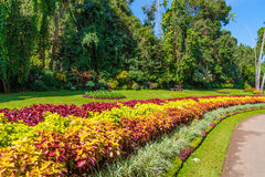 Multicolored alley of flowers and trees Royalty Free Stock Photography