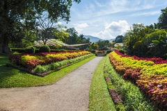 Multicolored alley of trees and flowers . Royal Botanic Gardens, Kandy. Sri Lanka stock image