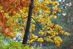 Multicolored autumn stock photo