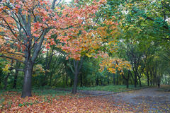 Multicolored  autumn alley in park. Royalty Free Stock Image
