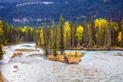 Multicolored autumn forests. Rocky Mountains of Canada. Multicolored autumn forests grow along the banks of the cold river. The concept of active and automobile Stock Photo