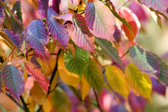 Multicolored Autumn Leaves Royalty Free Stock Photography