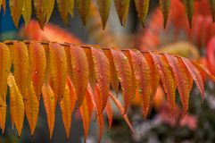 Multicolored autumn leaves stock image