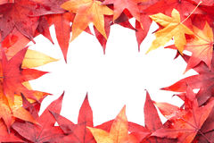 Multicolored autumn leaves framemiddle. Stock Photos
