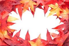 Multicolored autumn leaves framemiddle. Stock Photos