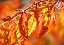 Multicolored autumn leaves in sunlight Stock Photo