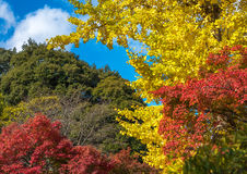 Multicolored autumn leaves, very shallow focus Royalty Free Stock Images