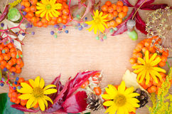 Multicolored autumn plant and flowers. Composition Stock Photo