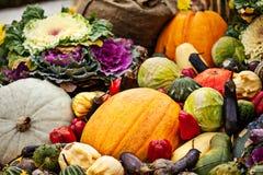 Multicolored autumn season vegetables assortment Stock Image