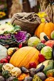 Multicolored autumn season vegetables assortment Stock Images