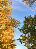 Multicolored autumn trees and blue sky stock photography