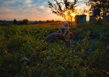 Multicolored beehives. Leaves of blue flowers. Sunset landscape stock images