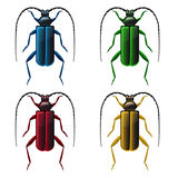 Multicolored beetles on white background Royalty Free Stock Image