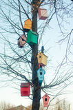 Multicolored birdhouses on the branches of a tree Stock Images