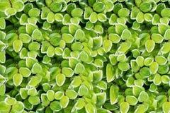 Multicolored bladeren als achtergrond worden gebruikt die De dichte gebladertebogen worden gegroepeerd in groepen stock afbeelding