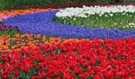 Multicolored bloembed Royalty-vrije Stock Afbeeldingen