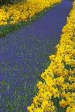 Multicolored bloembed van narcissen en hyacinten stock afbeeldingen