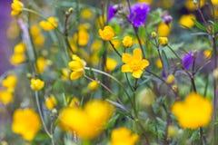 Multicolored bloemen Royalty-vrije Stock Fotografie