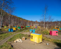 Multicolored booth sled dogs Royalty Free Stock Images