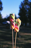 Multicolored braided marshmallows on wooden sticks for roasting. On the fire Stock Images