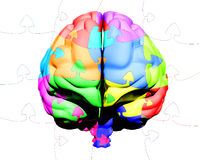 Multicolored brain puzzle Royalty Free Stock Photos