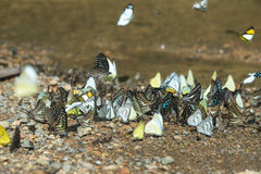 Multicolored butterflies. Royalty Free Stock Image