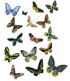 Multicolored butterflies on a white background Stock Images