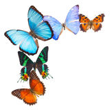 Multicolored  butterflis frame Royalty Free Stock Photo