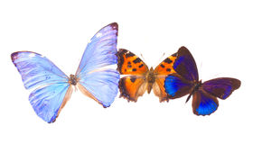 Multicolored  butterflis frame Stock Images