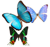 Multicolored  butterflis frame Stock Image