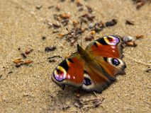 Multicolored butterfly `Vole` stock image