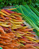 Multicolored carrots and green onions. Pretty multicolored carrots and green onions at the farmers market royalty free stock photo