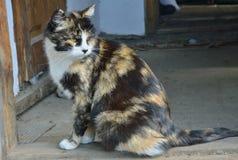 Multicolored cat 1 Stock Photo