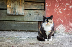 Multicolored cat near the old walls royalty free stock images