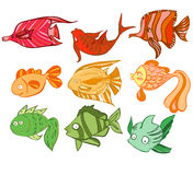 Multicolored charismatic fish Stock Photography