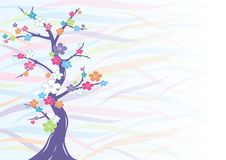 Multicolored cherry blossom  Royalty Free Stock Photo