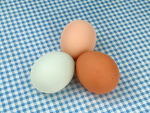 Multicolored Chicken Eggs on a Blue Checkered Tablecloth Stock Photography