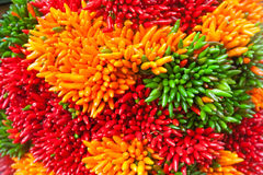 Multicolored chili pepper bunches on the Venice market Royalty Free Stock Photo
