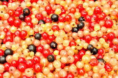 Multicolored  currants for background, top view. Royalty Free Stock Photography