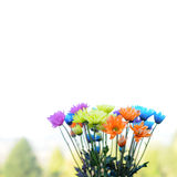 Multicolored Daisy Flowers Royalty Free Stock Images